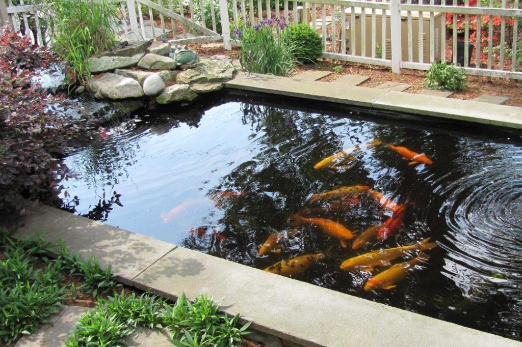 Kolam Ikan Koi Solusi Menghilangkan Stress